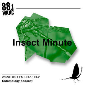 Insect Minute