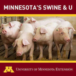 Minnesota's Swine & U